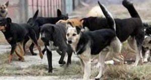 Molimo nadležne institucije da ispitaju sve osobe povezane sa nezakonitim premještanjem pasa
