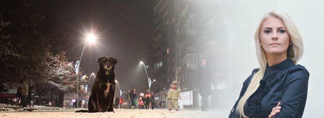 Zenička vlast ne zna riješiti problem grijanja, pa potiče na ubijanje pasa