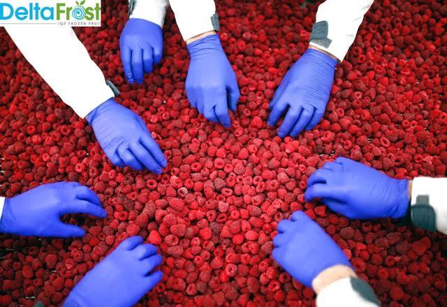 Delta Frost traži radnike za proizvodnju smrznutog voća