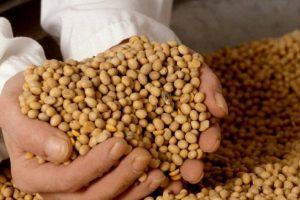 Hranu s GM sojom u BiH proizvodi čak 31 poduzeće, saznajte koja